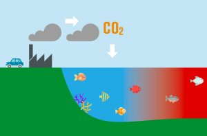 Ocean acidification and fisheries declines